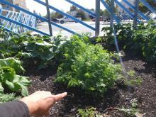 Yellowknife School Garden