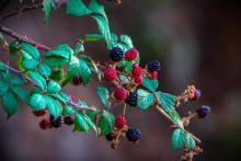 Wekweeti Berry Workshop