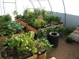 Paulatuk Embraces And Inspires Agriculture Development