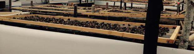 Morel Mushroom Harvest Site