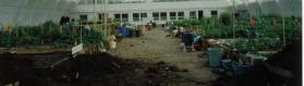 Greenhouse In Inuvik