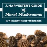 Morel Mushroom Harvester's Guide